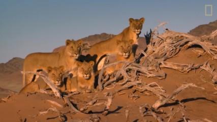 Световен ден на лъвовете