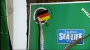 Октопод предвиди победа на Гана над Германия