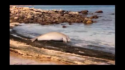 Сензация- куче атакува акула