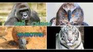 най - силни животни