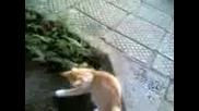 Котка И Мишка