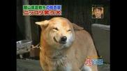 Куче което се усмихва