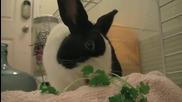Сладък заек яде магданоз