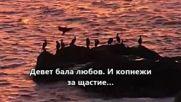 ✿ღڪے Девет бала любов ڪےღ✿ Ивелина Никова