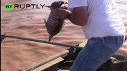 Little Armadillo Saved from Flash Floods in Oklahoma