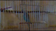Моите папагали