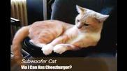 Subwoofer Cat!!!