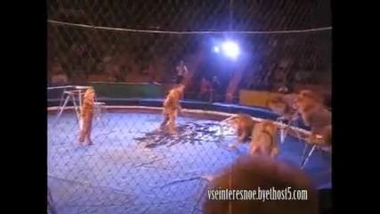 Лъв напада дресьор в цирка