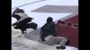 кондор играе хокеи