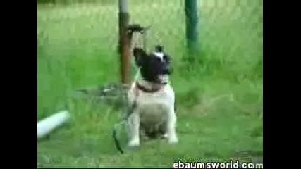 Преграхнало Куче