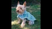 Кучешки дрехи 1