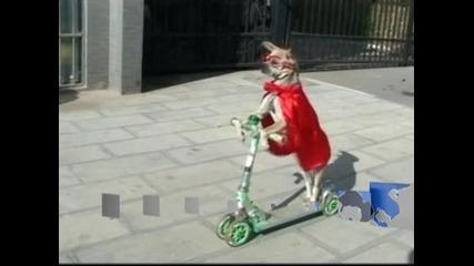Двегодишно куче кара колело и скейтборд, готово е за цирка