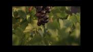 Карнобатска Гроздова - кога се бере гроздето
