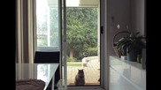 Котешката мисия Възможна /spidercat (-: