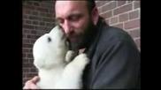 Бялото Мече Knut