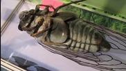 Механични насекоми в интерактивен музей