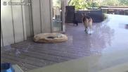 Куче като строга майка ,слага игривото си малко да спи