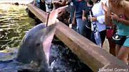 Делфини непозволяват да ги снимат .