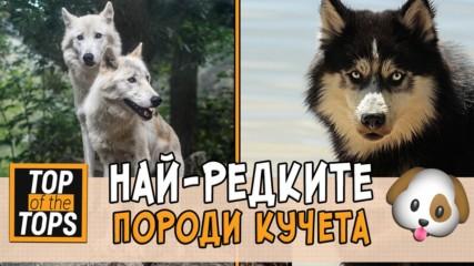 Топ 7 на породите кучета, които не се срещат често