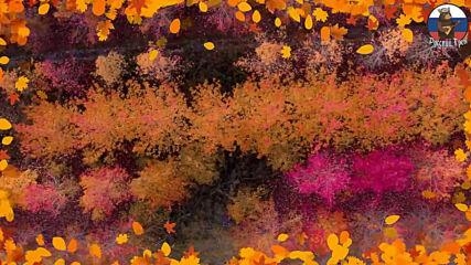Андрей Шпехт - Осенний дождь!