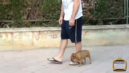 Куче инсценира собствената си смърт