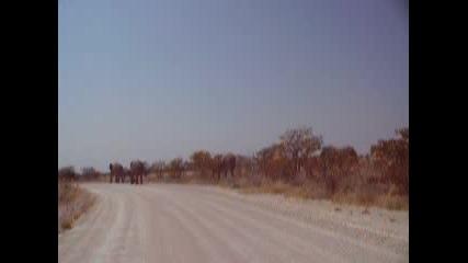 Иван Коцев В Намибия, Слонове На Път