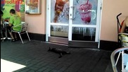 Котка се прави на умряла пред вратата на Макдоналдс