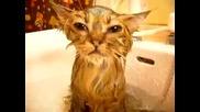 Коте под душа - Йода