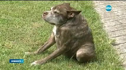 Квазимодо – най-грозното куче на света