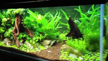 Plant's aquarium