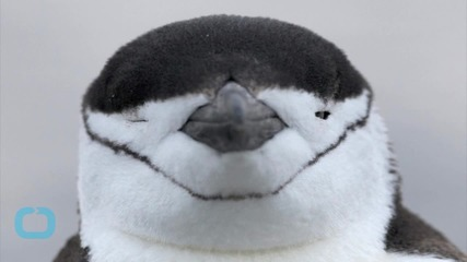 A Book About Gay Penguins is One of the Most Disputed Titles in the U.S.