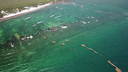 Mexico: Drone footage reveals tonnes of rotting sargassum seaweed swamping Yucatan beaches