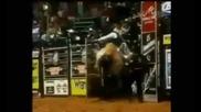 Разярени бикове в действие