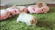 Пухкави сладки малки котенца!