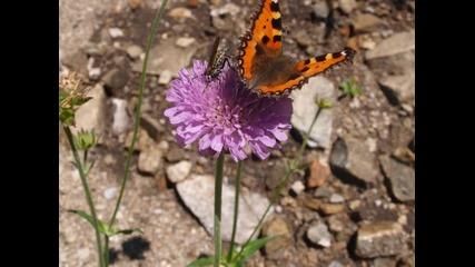 Цветя от земята на Бесите - Теrrа Bessica