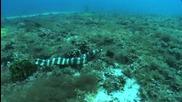 Ocean life : Bohol