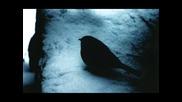Eldin Huseinbegovic - Zbog tebe zivim ( Ajnur Serbezovski - Daleko si )