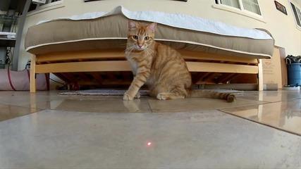 Котета гонят лазер !