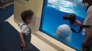 Делфин белуга се закача с малко дете , смях