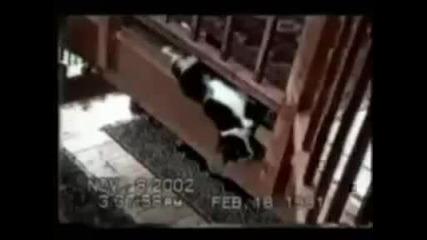 Луди котки - смях