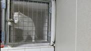 Коте е изпечен беглец , безпроблемно напуска килията си , смях