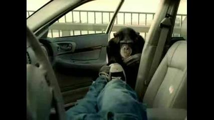 Не крадете коли - Смях
