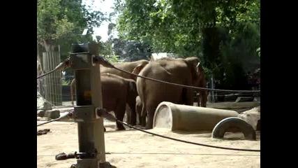 Slonove