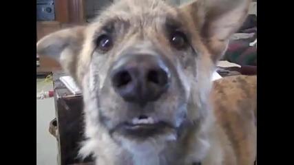 Говорещото куче