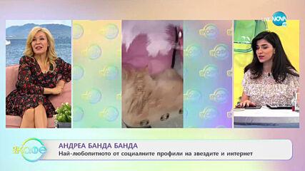 """Андреа Банда Банда: Най-любопитното от социалните профили на звездите - """"На кафе"""" (25.01.2021)"""