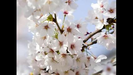 Пролет ...