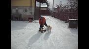 най - смешните животни и хора в продановци :) ) ) ) ) )