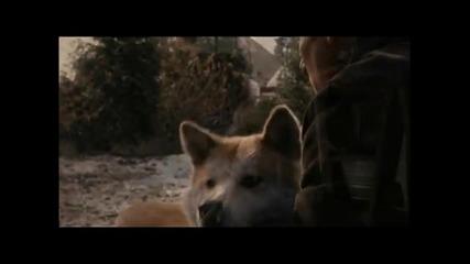 История за най - преданото куче на света Акита - ину (филм по действителен случай)