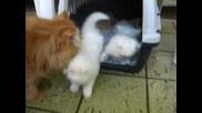 Пухкави Котенца - Бебчета