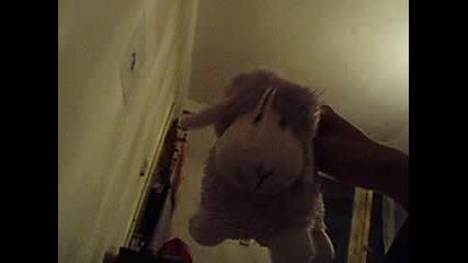 Овца - Та